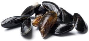 Moule Mytilus Edulis Common mussel Miesmuschel Mejillon