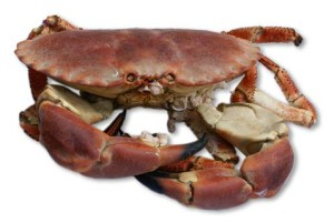 tourteau cuit crabe cuisson recette
