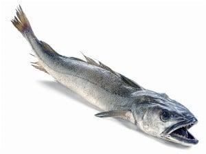 merlu colin recette cuisson Merluccius merluccius hake Seehecht merluzza poisson fish