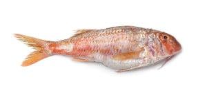 Rouget barbet Mulus surmulatus red mullet Meerbarbe salmonetes poisson fish cuisson recette