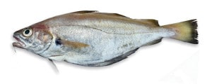 tacaud poisson cuisson recette