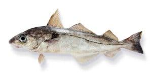 églefin aiglefin haddock Melanogrammus aeglefinus Schelfisch eglefino poisson fish