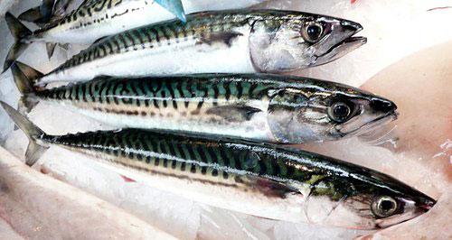 maquereaux cuisson poêle Scomber scombrus Atlantic mackerel Makrele Caballa del Atlantico