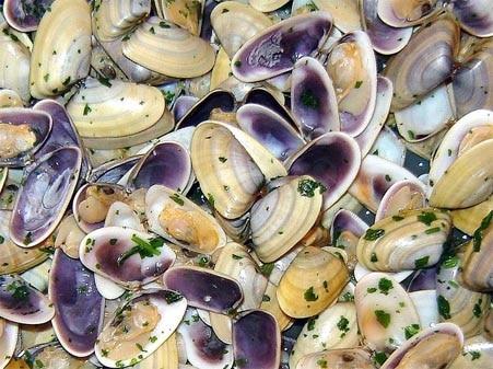 tellines cuites cuisson Tellina tenuis Flat tellin Platte Tellmuschel Telina plana recipe