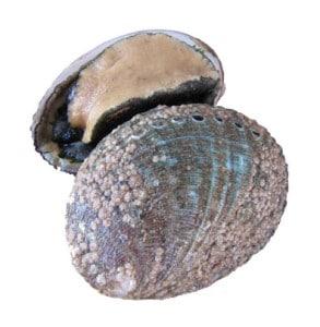 ormeaux cuisson recette Haliotis tuberculata tuberculata Ormeer Seeorh Oreja de mar