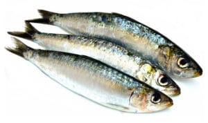 sardine commune sardina pilchardus europa pilchard cuisson recette recipe