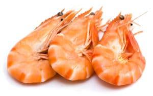 crevettes roses cuites temps de cuisson shrimp