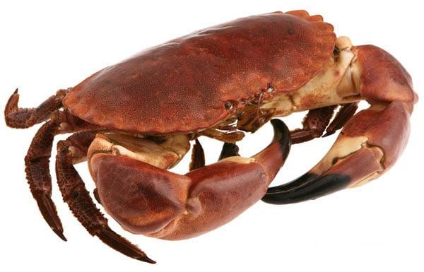 cuisson d 39 un tourteau crabe temps de cuisson et recettes. Black Bedroom Furniture Sets. Home Design Ideas