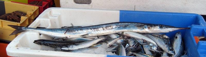 orphie belone belone fish poisson temps de cuisson recette recipe