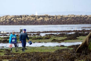 pêche à pied étrilles palourdes crevettes