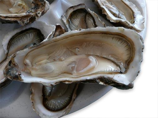 huître creuse ouverte aber breton
