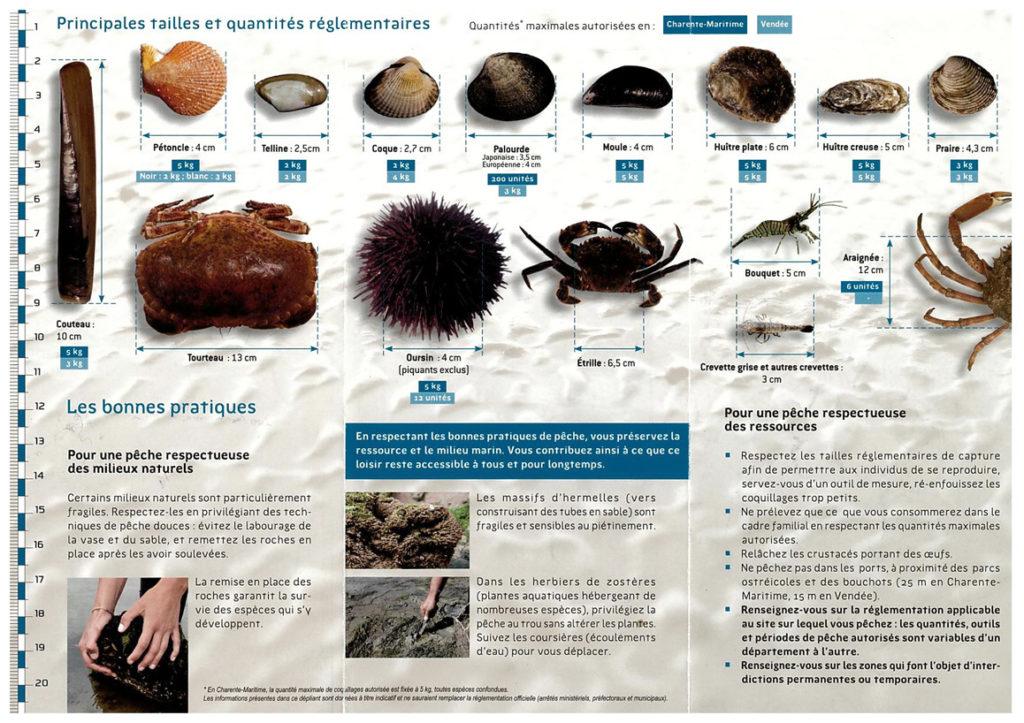 pêche à pied tailles quantités réglementaires