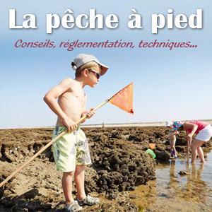 pêche à pied conseils réglementation techniques coquillages crustacés