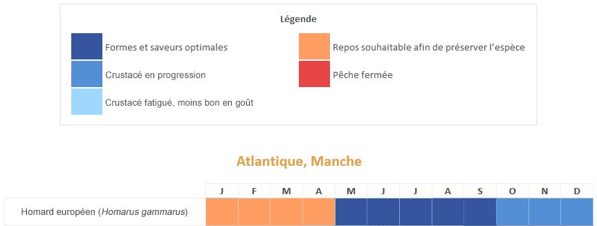 homard bleu européen calendrier saisonnalités période